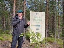 SCA berättade om hur de använder hela trädet i sin produktion.