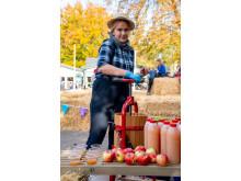 Æblemosteri og efterår på Bakken