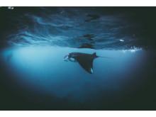 Copyright_Daniel Hunter_UK_Entry_Open_Wildlife, ourtesy of SWPA 2017