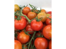 Röda klimatcertifierade tomater
