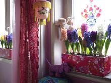 Hyacinter i blommig låda