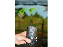 """#KickItToBrazil Peugeot planterar ett träd för varje """"fotbollskyss"""""""
