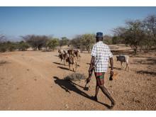 Gömställe för Turkanakrigarnas boskap. Foto Fredrik Lerneryd