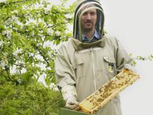Biodlare Martin Svensson utför pollinerinsgtjänster för Kiviks musteri.