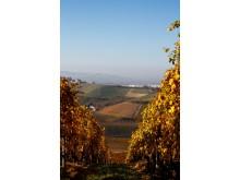 Gajas Sorì San Lorenzo vingård