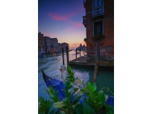 Alphaddicted_Venedig_von Sony 02