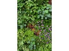 Ätbar växtvägg
