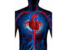Enhanced_cardiovascular_system