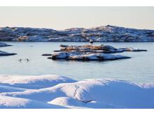 Västsverige VinterPaddling Smögen-Photo Cred Roger Borgelid