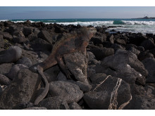 Galapagos i Google Street View