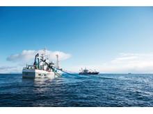 Norwegische Meeresfrüchtexporte nehmen mehr als doppelt in den vergangenen 10 Jahren zu
