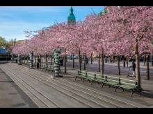 Nolasoffor, Kungsträdgården Stockholm.