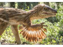 Knuthenborg Safaripark:  Dinosaurier-Wald - Velociraptor1