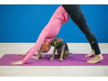 Furry friend yoga