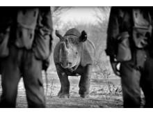 The Poaching wars av Frank af Petersens