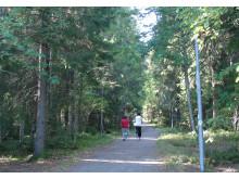 Tätortsnära skog
