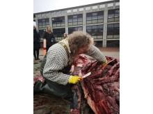 Dyrlæge Åge Alstrup udtager prøver
