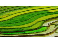 Jan Styblik - 79806-135928 - In the rice fields 1