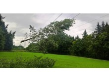 Warnung_Baumarbeiten_nahe_Stromleitungen_Bild_1