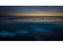 Meeresleuchten auf Sylt