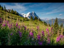 0512_Grindelwald