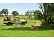 Fairmont Hotels & Resorts > MAR Fairmont Mara Safari Club > Safari