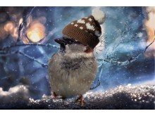 Vinterfugle på Lejre Museum. Kredit Pixabay