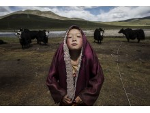 Nomadic Life Threatened on the Tibetan Plateau, fot. Kevin Frayer