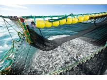 Makrell fiske - mackerel fishing