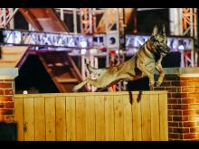 AMERICA'S TOP DOG_HISTORY