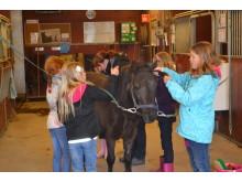 Nu letar vi efter nya skolklasser som vill uppleva häst