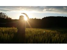 Qigong i solnedgang