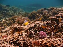 Mauritius - Unterwasserszene