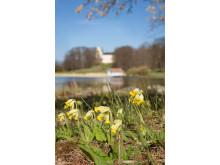 NMA0080082_33 Tyresö slott och park