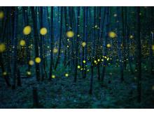 Enchanted Bamboo Lights