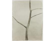 Mats Gustafson, Tree I, 2003, akvarell på papper