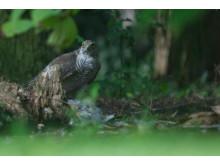 Haggis Neeps and Chatty - Garden Life