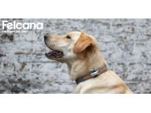 Felcana intelligent pet care
