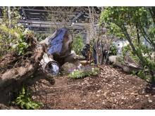 Årets idéträdgård - Slottsparkens rötter