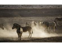 Spectaculaire wildlifeserie van natuurfotograaf Chris Schmid