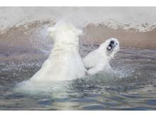 Ranua Polar Bear Cub 10