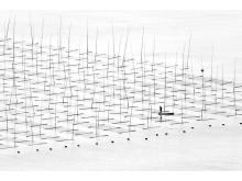 Farming the Sea, fot. Tugo Cheng