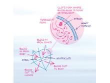 djup ventrombos undersökning
