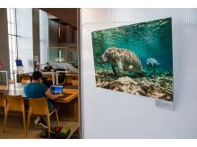 """""""Aquatische Begegnungen"""" in der Wildauer Hochschulbibliothek"""