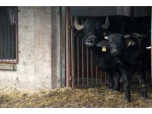 Weihnachten im Stall auf dem Klostergut Mößlitz: Bärenherz erhält beeindruckende Spende