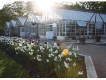 Växthusen på Rosendals Trädgård, Djurgården, Stockholm