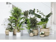Rusta S1_2020_Homedecoration_konstväxter_0350