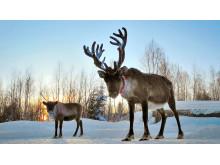 Jul  i Djurparken