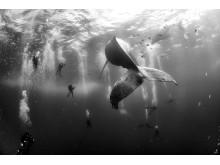 World Press Photo 2016 Nature, 2nd prize singles