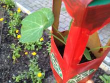 Odla staden - hängande trädgård